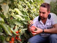 Овощи в теплице — подкорка самых популярных видов и особенности смены культур (84 фото)