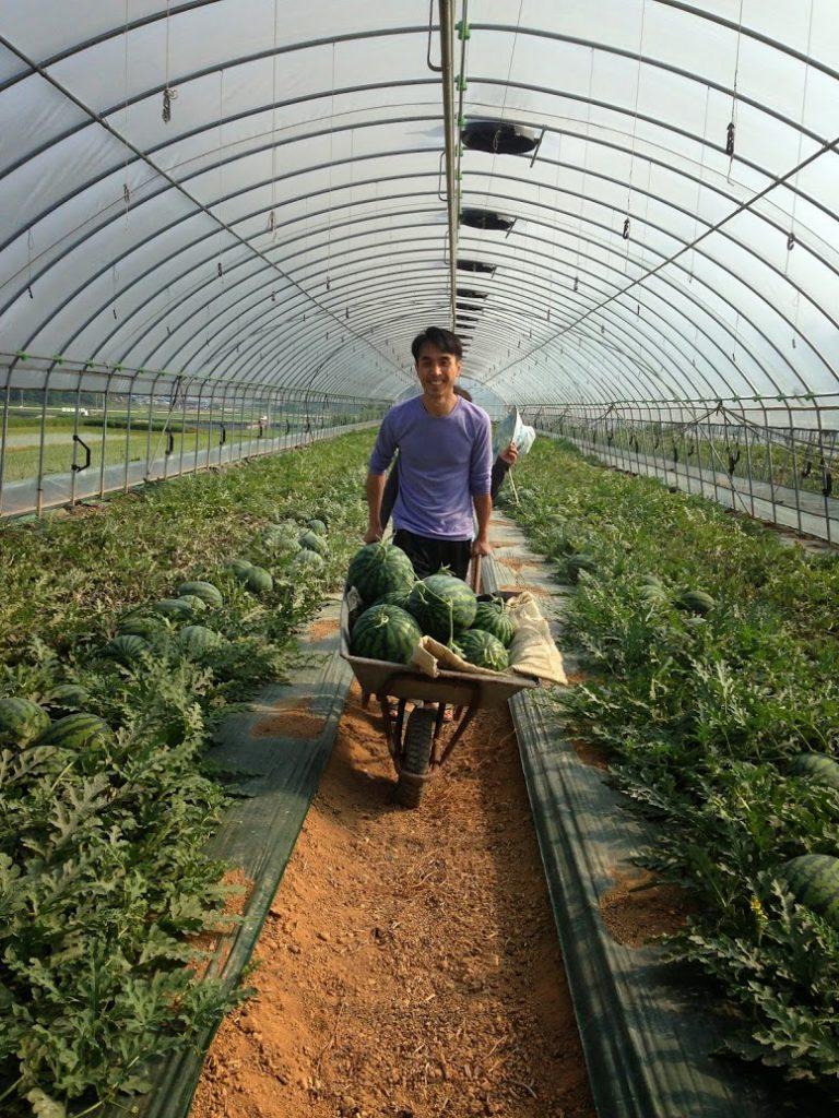 Выращивание в теплице специй 69