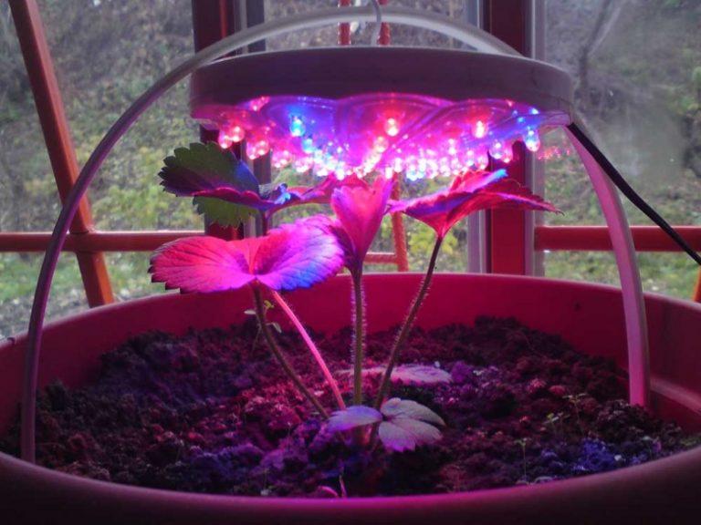 Как сделать свет для растений