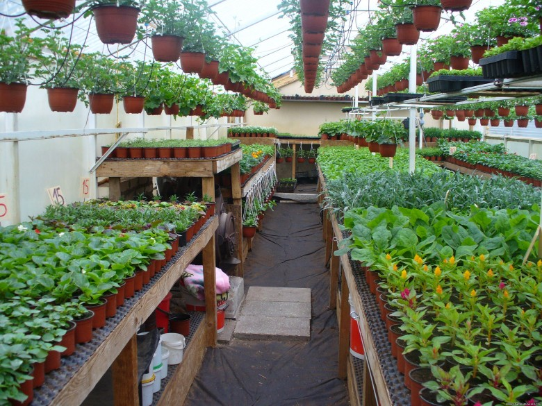 Выращивание цветов как бизнес , вложения: от