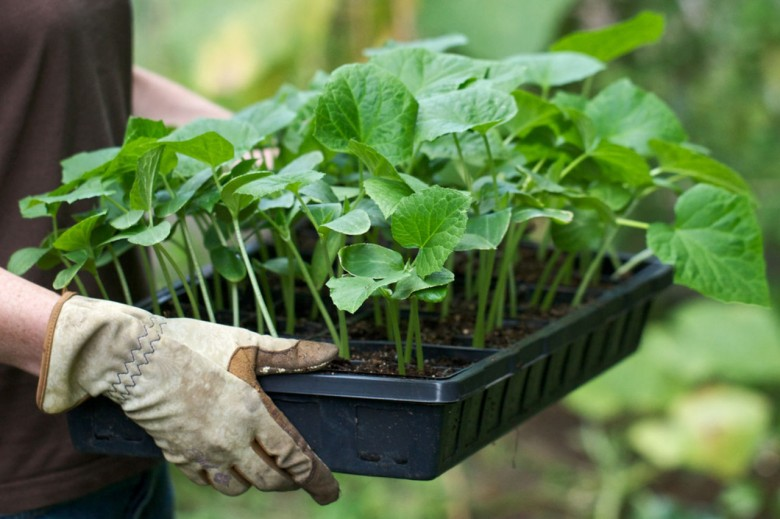 Рассада рост удобрение 20