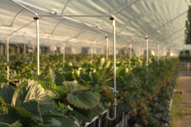 Выращивание в теплицах в зимний период 723