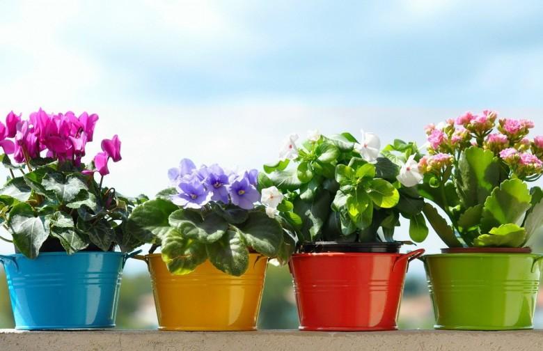 какие горшечные цветы нужно держать дома