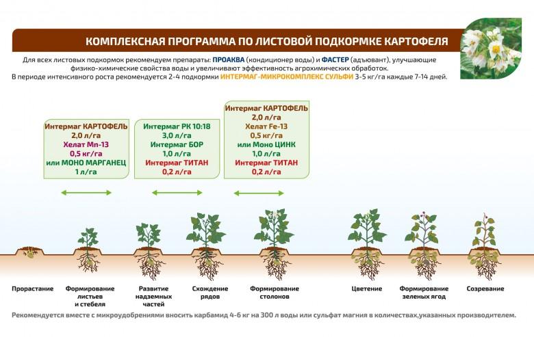 Внекорневая подкормка рассады томатов мочевиной 89