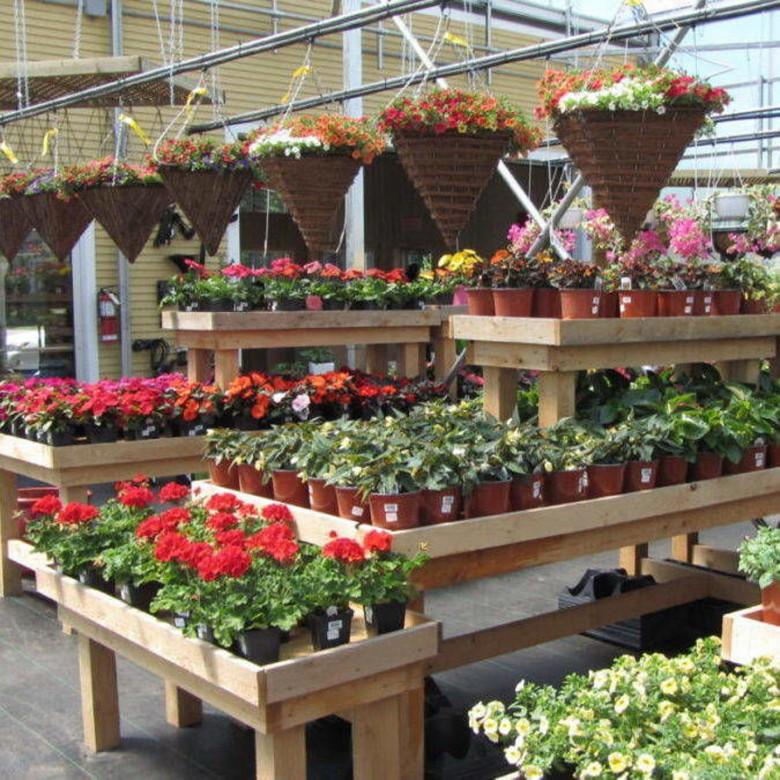 Выращивание цветов в теплице для бизнеса