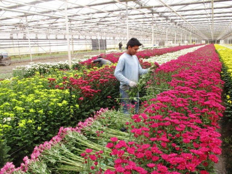 Предприятие по выращиванию цветов 79