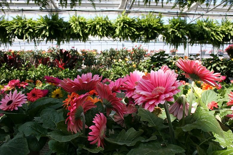 Выращивание экзотических растений как бизнес 16