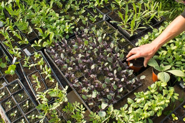 Выращивание хризантем в теплице бизнес план 53