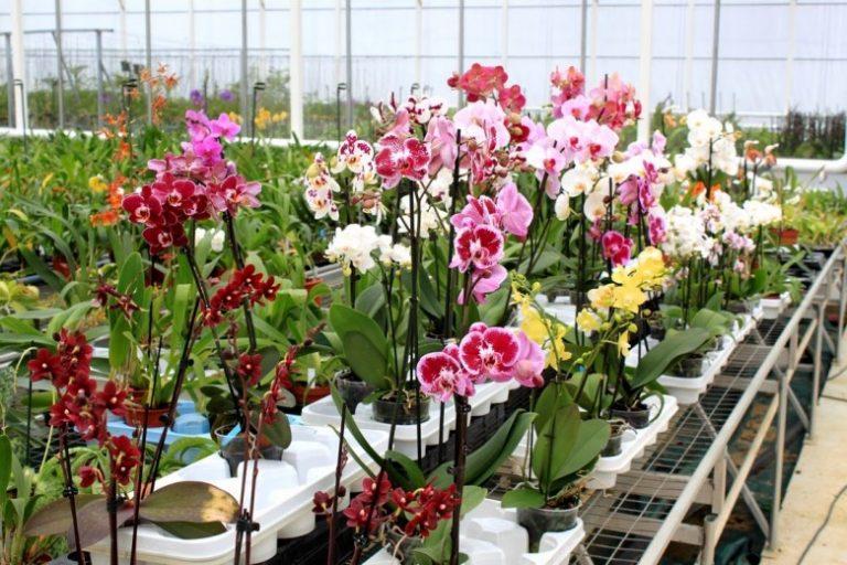 Выращивание экзотических растений как бизнес 100