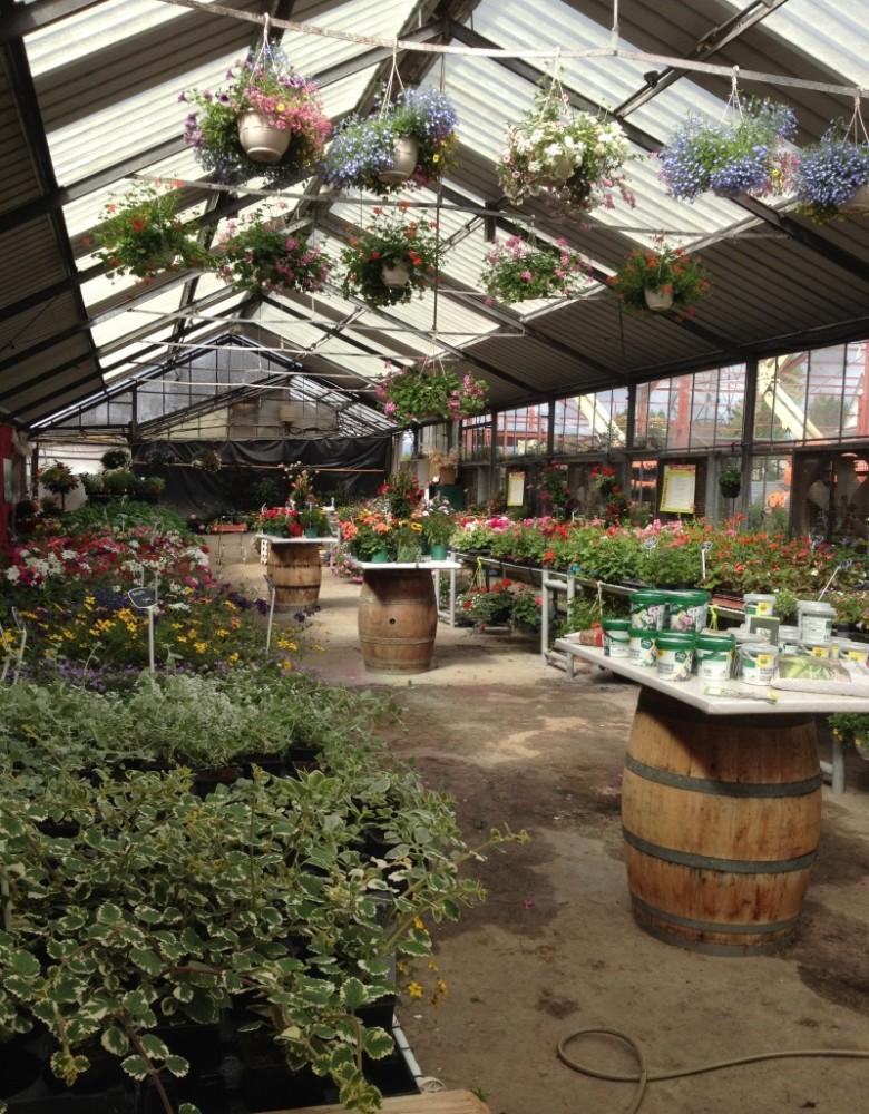 Выращивание экзотических растений как бизнес 13