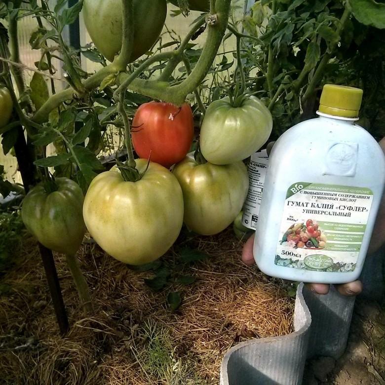 мифы гуматом калия через сколько подкармливать помидоры высокой