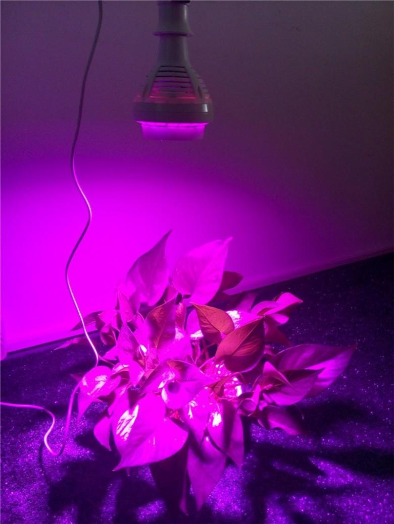 Автоматическая полив для цветов