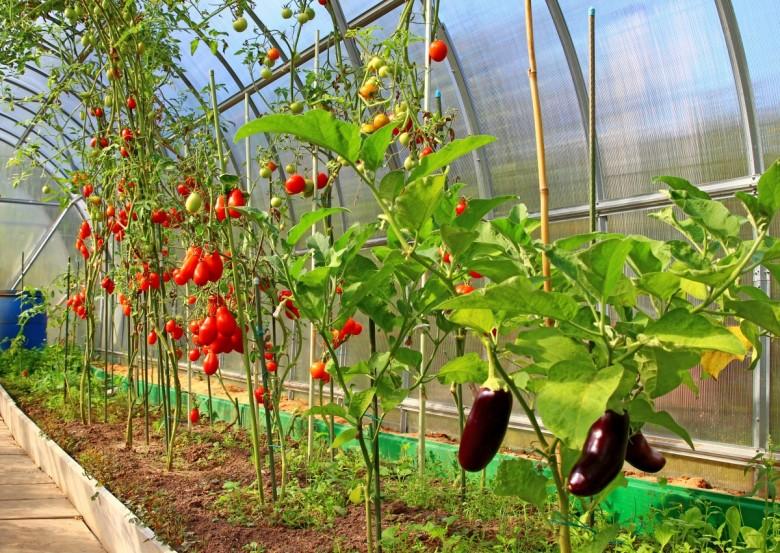 Теплые грядки в теплице или огороде
