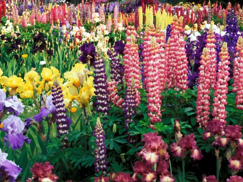 Какие цветы сажают весной в открытый грунт (многолетники, луковичные)