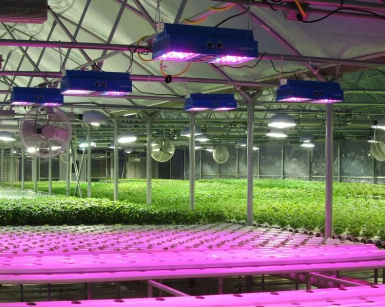 Фитопрожекторы для растений