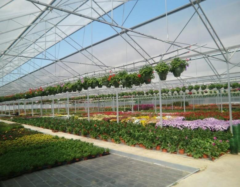 Выращивание многолетних цветов бизнес