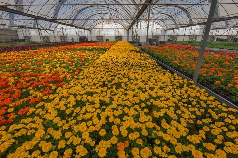 Как называется бизнес по выращиванию цветов
